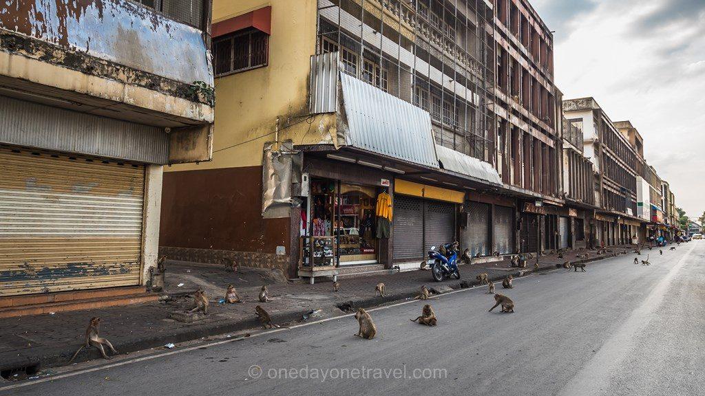 Lopburi Thaïlande ville des singes