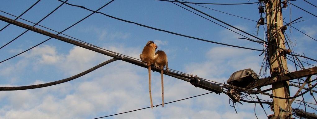 Lopburi vile des singes Thaïlande Blog Voyage OneDayOneTravel