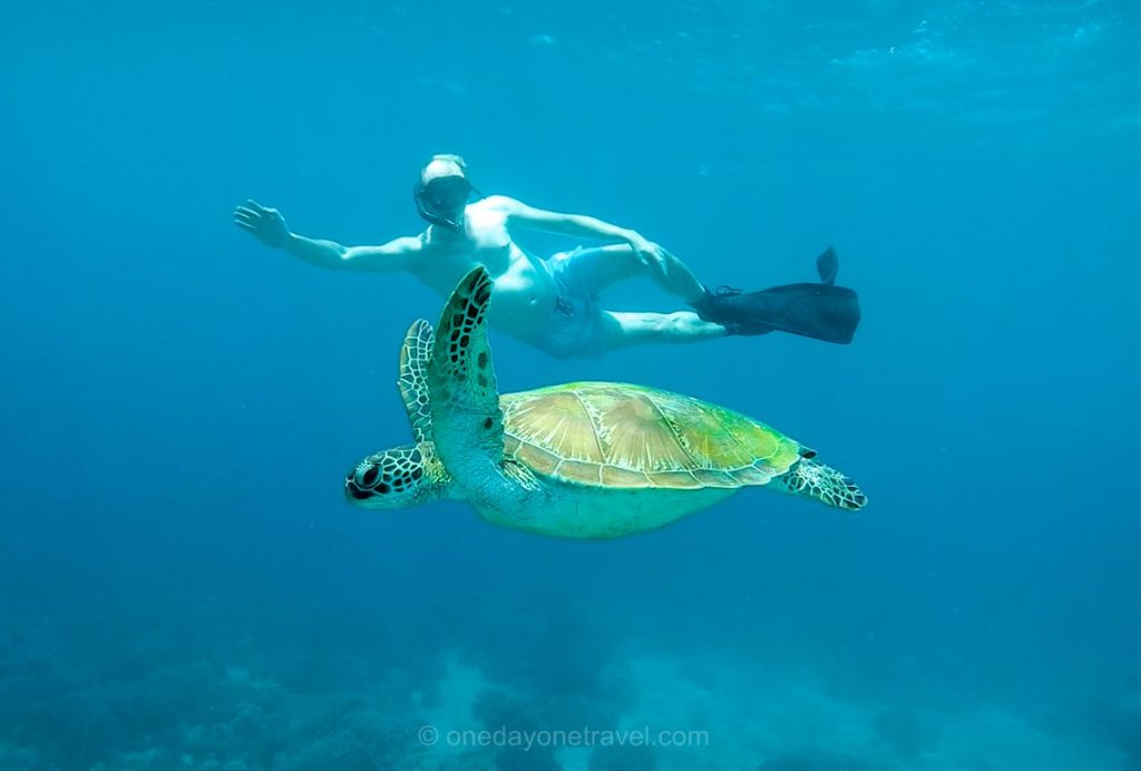 APO island nager avec tortue Philippines