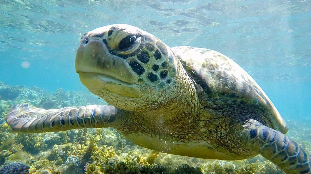 Philippines fonds marin tortue blog voyage OneDayOneTravel