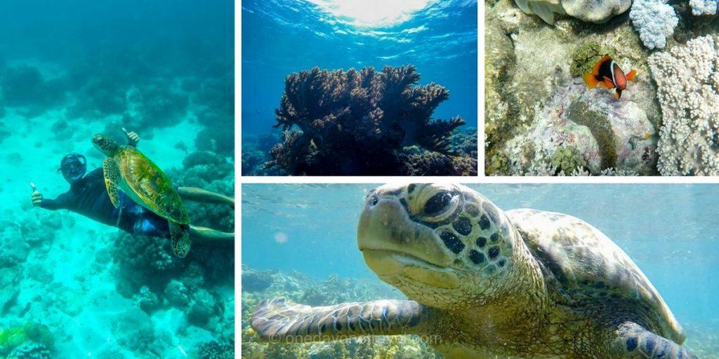 Apo Island tortue nemo Philippines Ile de Negros