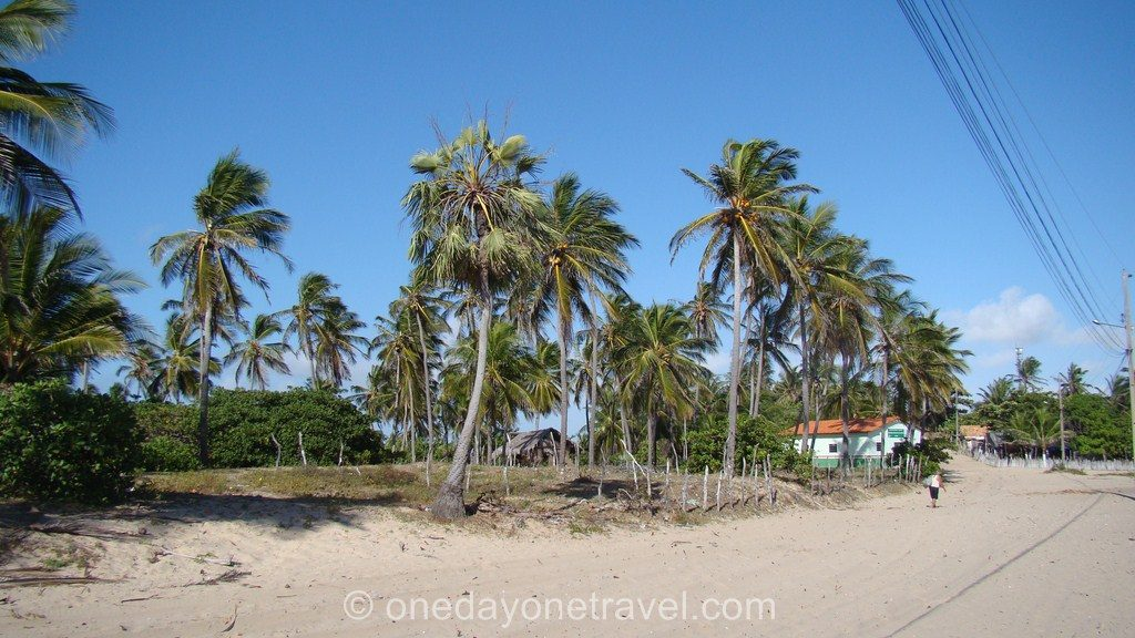 Atins Lençois bresil voyage palmier plage