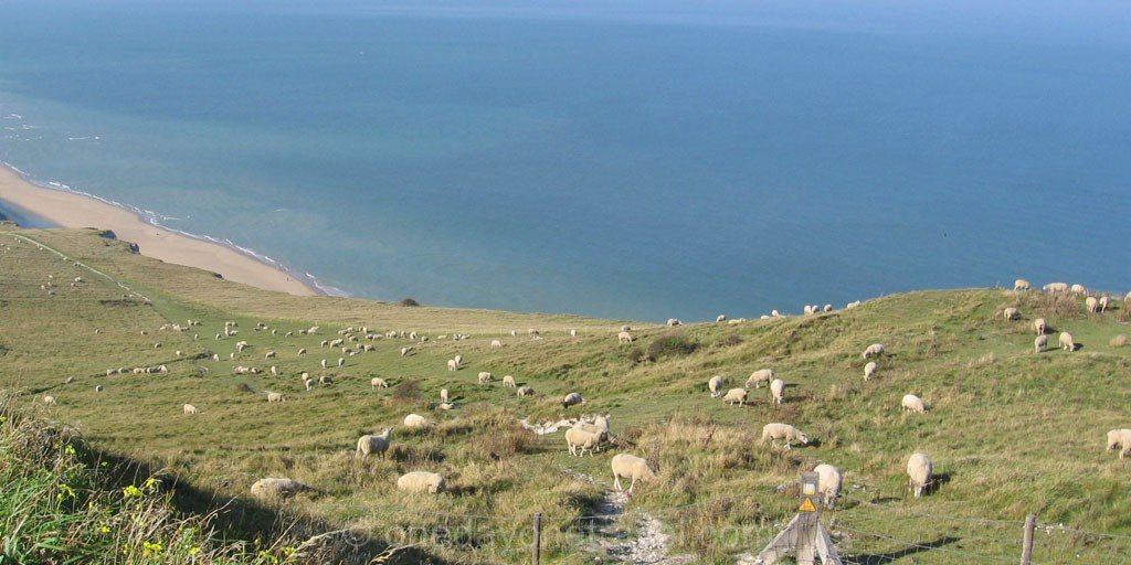 Baie de somme petit train mouton