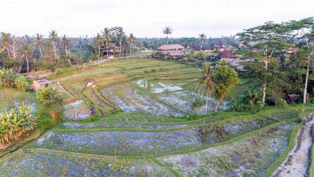 Bali rizière Ubud Blog Voyage Indonésie