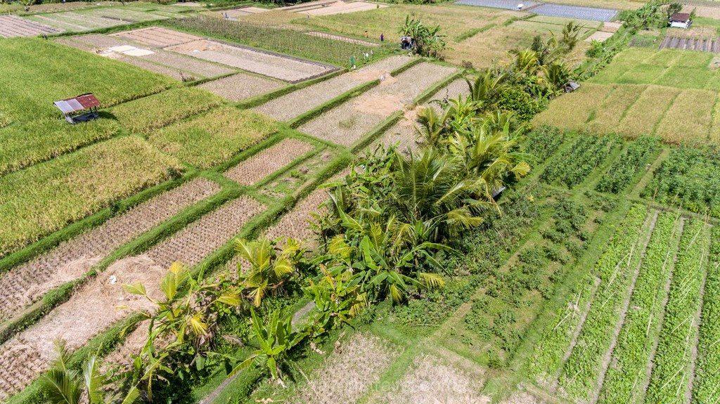 Bali authentique rizière drone
