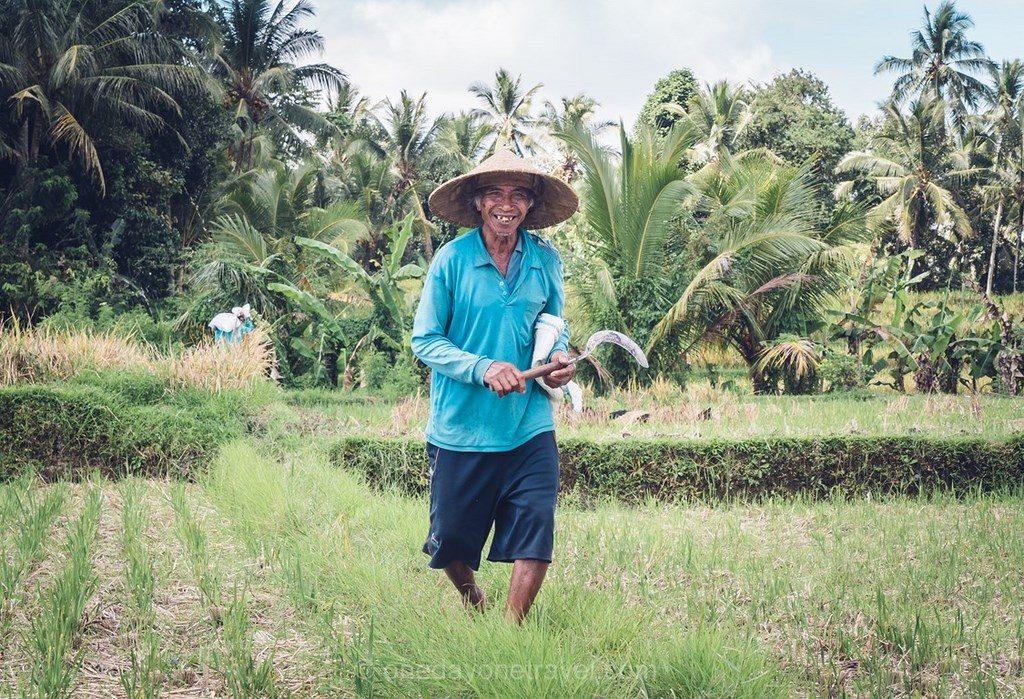 Bali authentique rizières