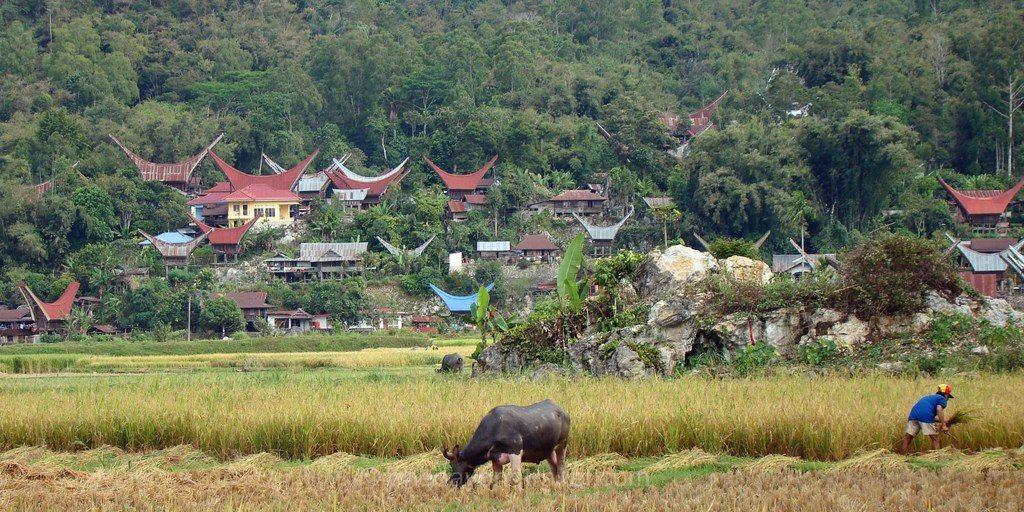 Bori Rantepao Pays Toraja buffle rizières