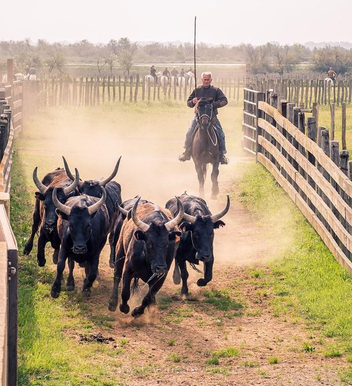 Camargue taureau échange de maison