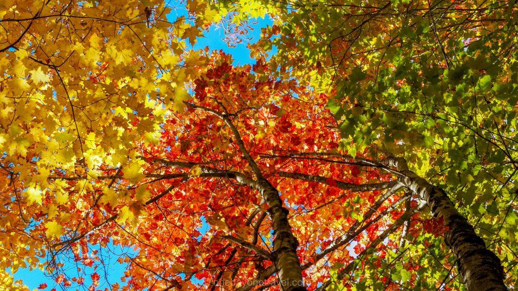 Automne Québec feuilles rouges