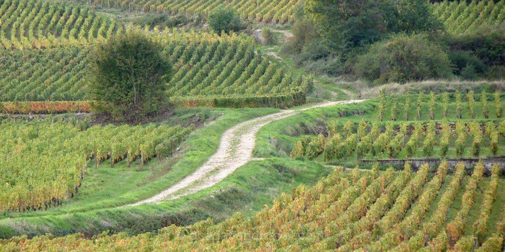 Climats de Bourgogne vignes Bourgogne