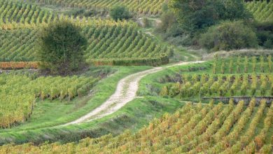 Photo of Week-end en Bourgogne sur la route des Grands Crus entre Dijon et Beaune