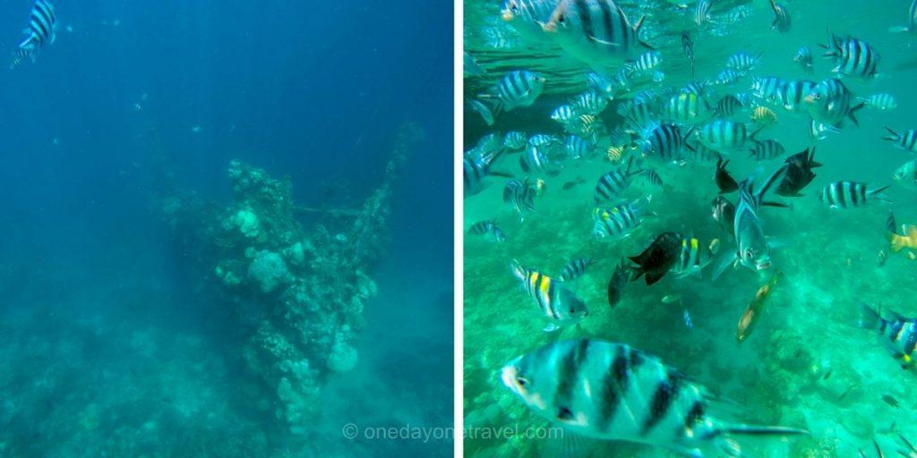 Coron Philippines snorkeling epave