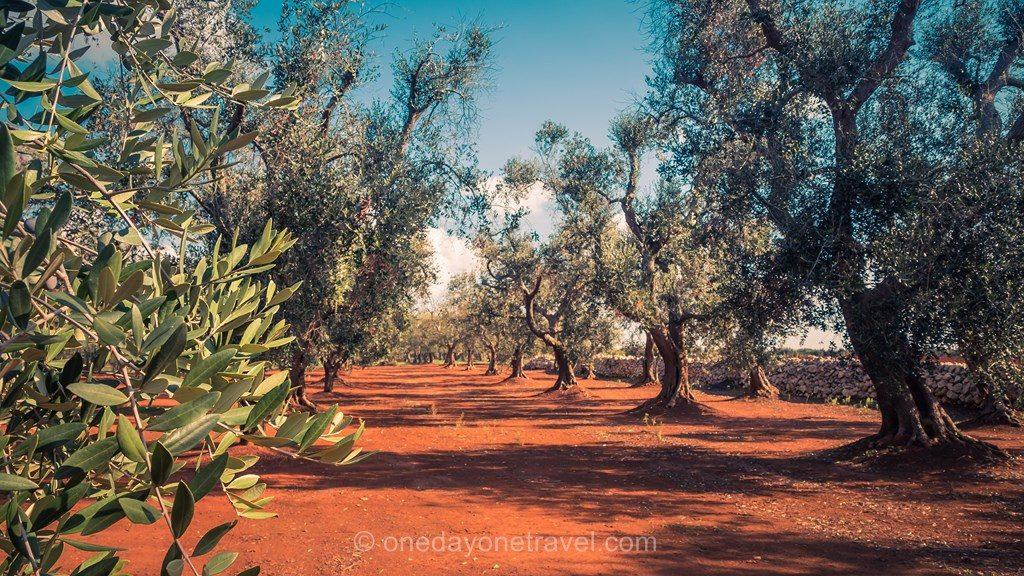 Destination de rêve Pouilles Italie olivier