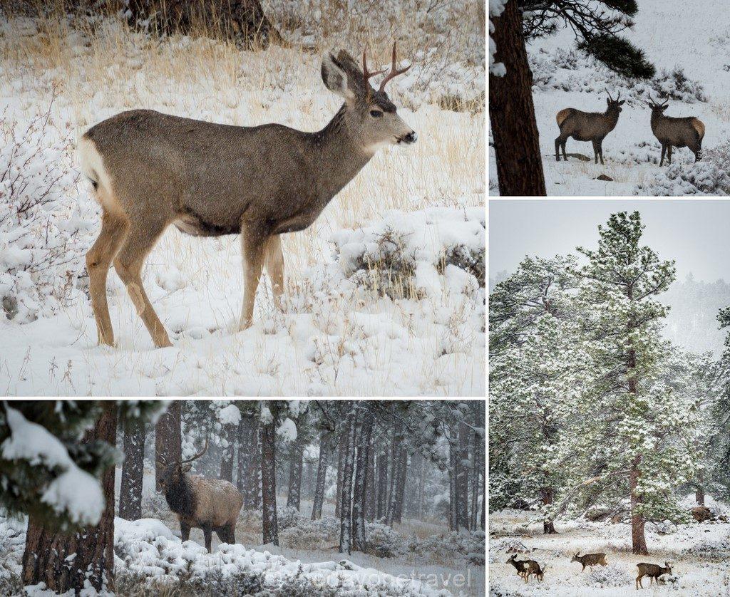 Estes Park Rocheuses hiver animaux