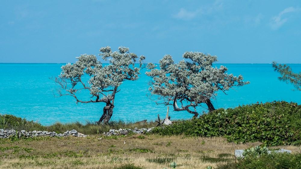 voyage aux bahamas Exumas arbre mer