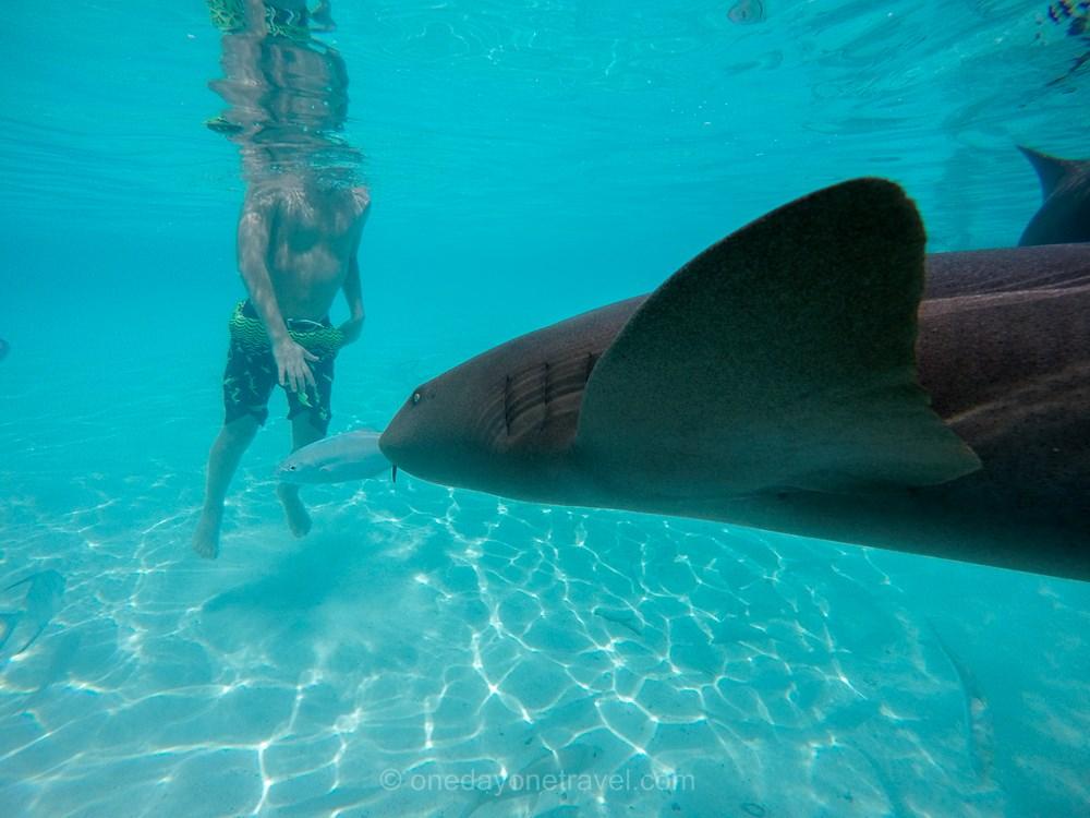 voyage aux bahamas Exumas requin