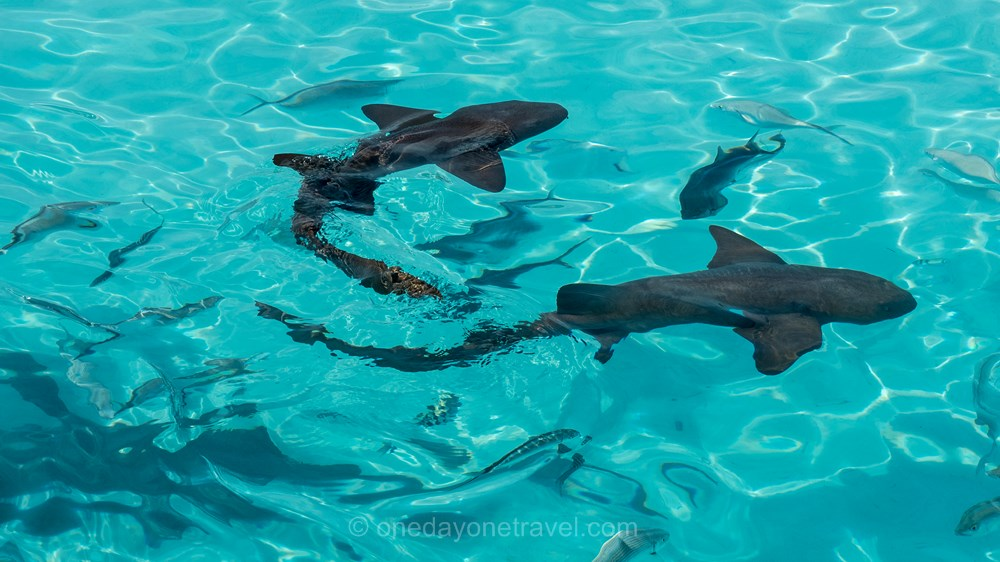voyage aux bahamas Exumas requins