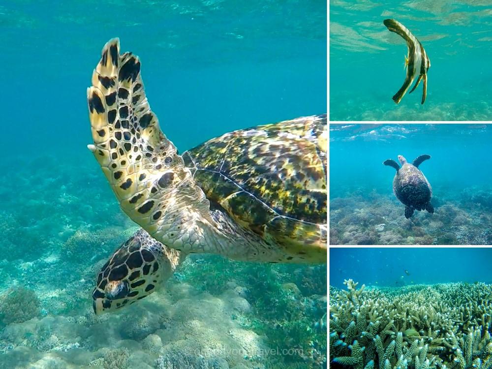 Gili Asahan snorkeling tortue fond marin Indonésie