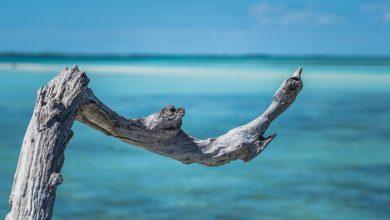Photo of Voyage aux Bahamas pour la première fois : Itinéraire, conseils, vidéos