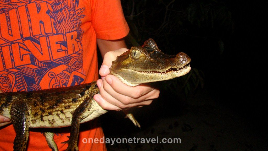 Jamaraqua Tapajos Amazone Caïman