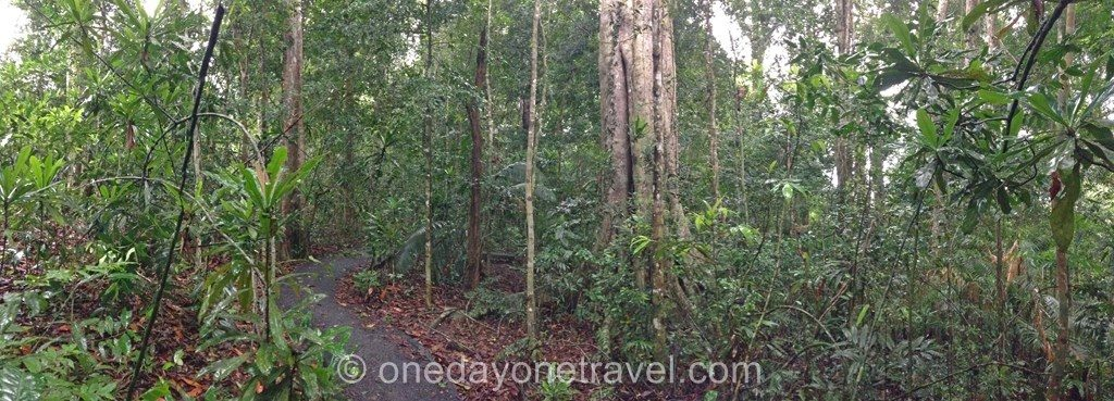 Khao Yai Nature forêt Trek
