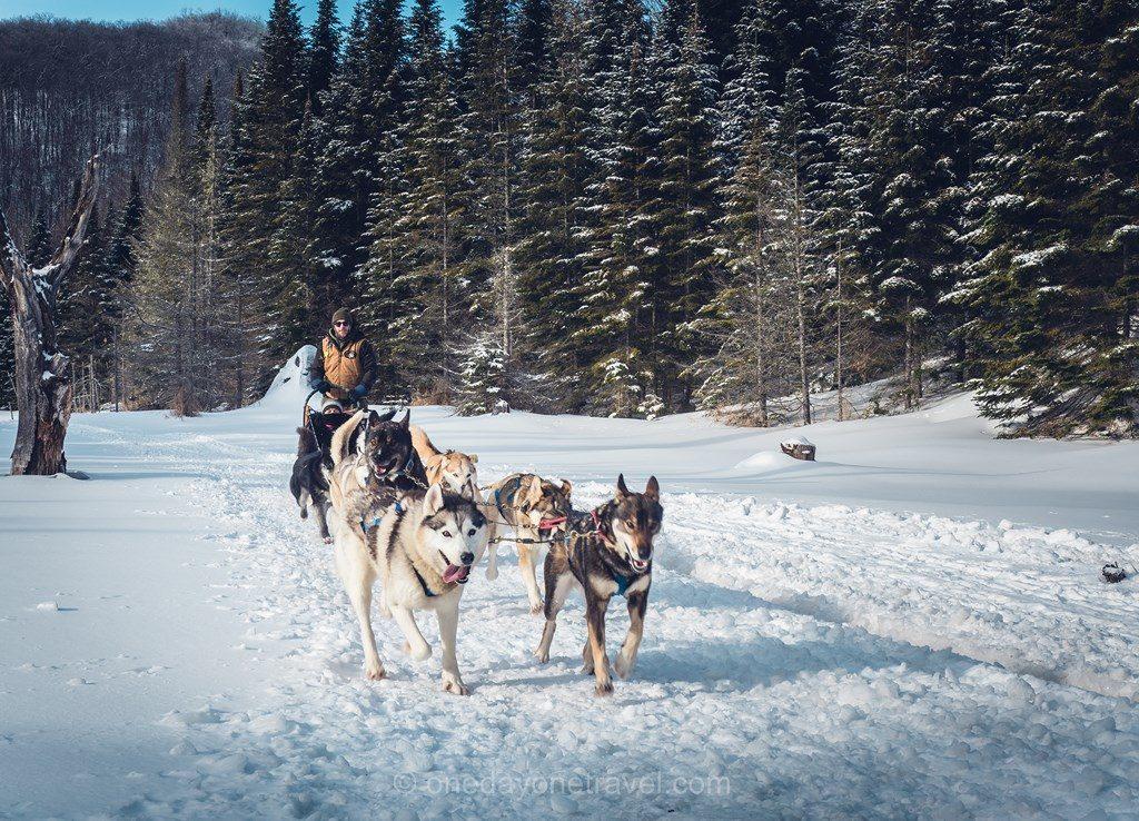 Laurentides hiver Kanatha Aki chien traineau neige