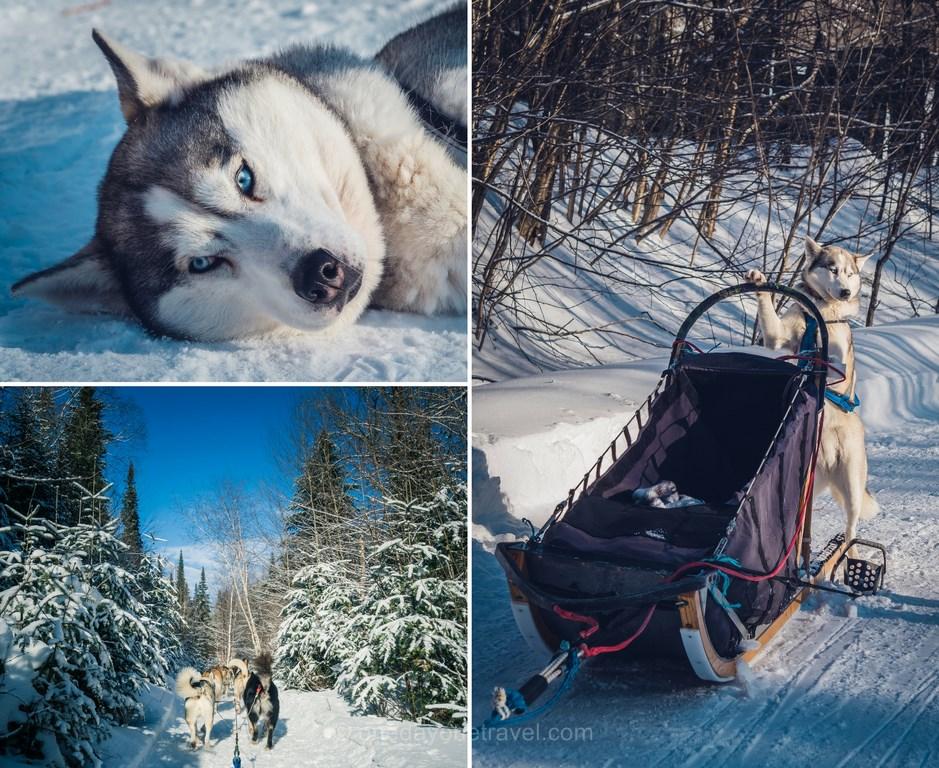 Les laurentides en hiver kanatha aki chien de traineau blog voyage quebec