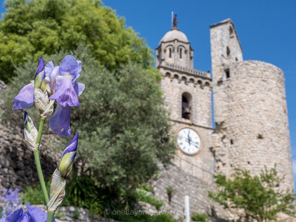 Luberon église orchidée