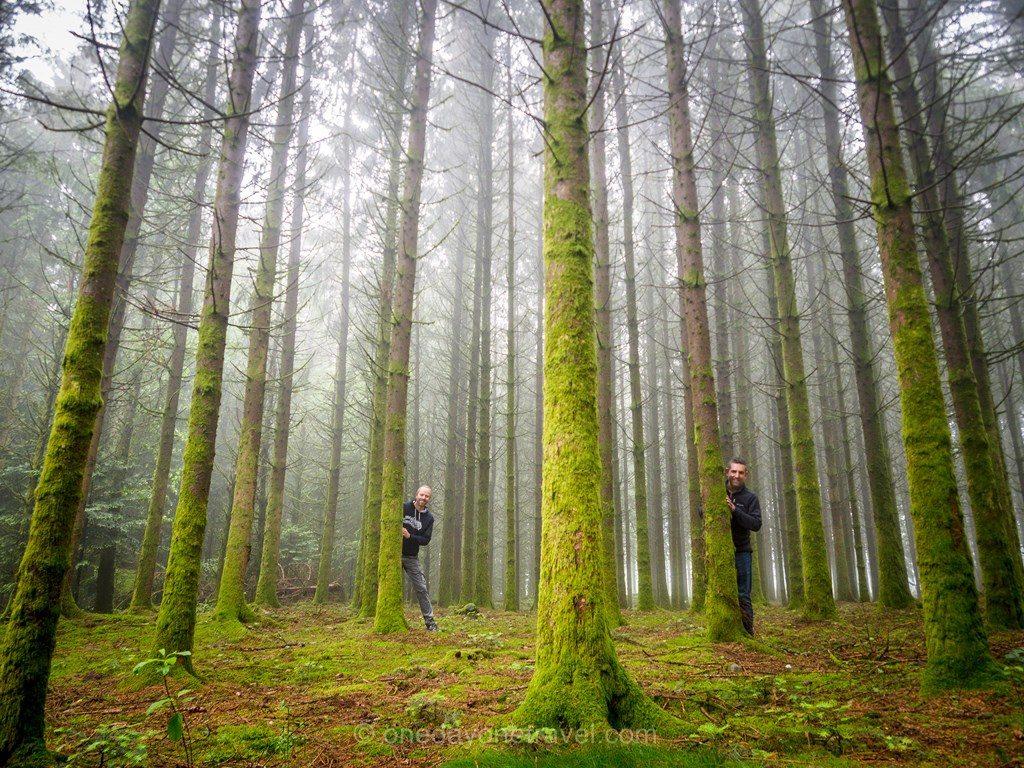 Vos ges du sud forêt Richard Franck