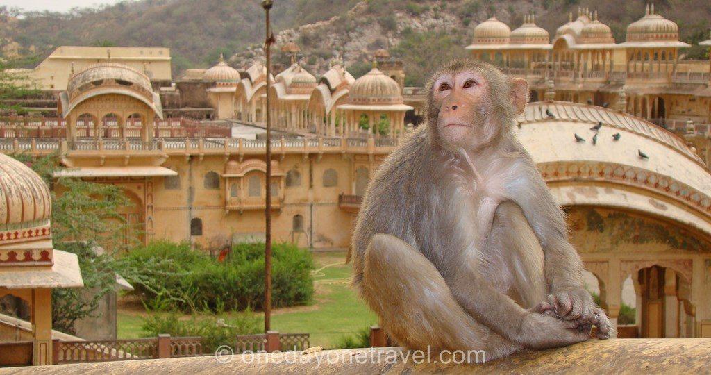 Monkey temple singe devant temples