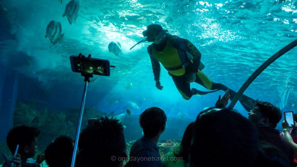 Ocean Park Visiter Manille