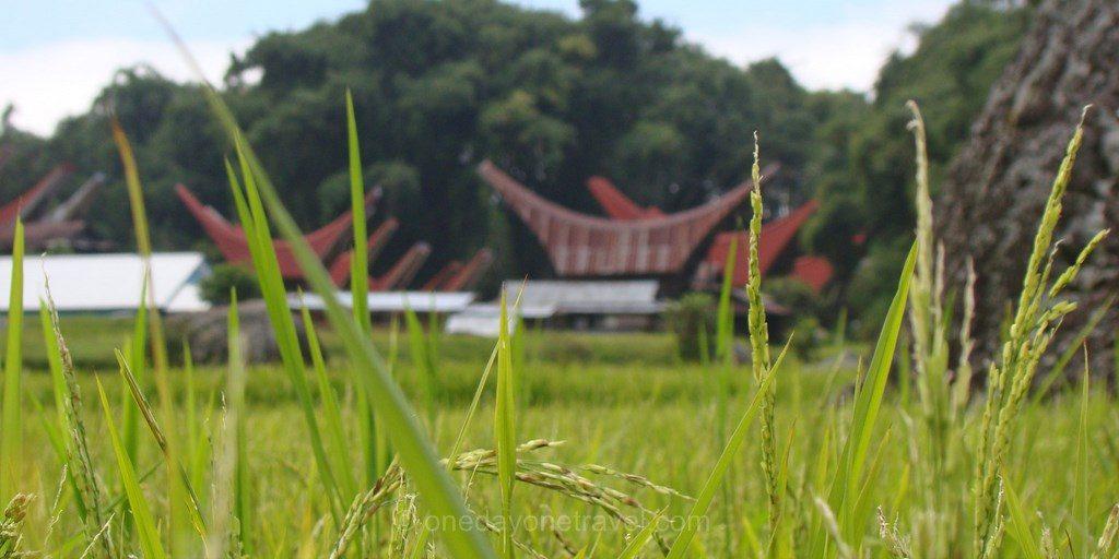 Pays Toraja Sulawesi Célèbes blog voyage
