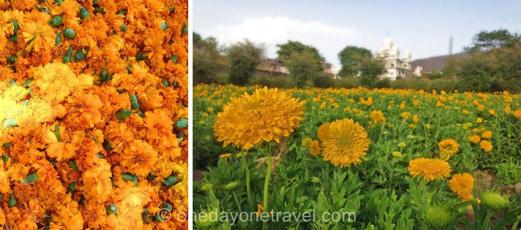 Rajasthan fleur collier inde offrande