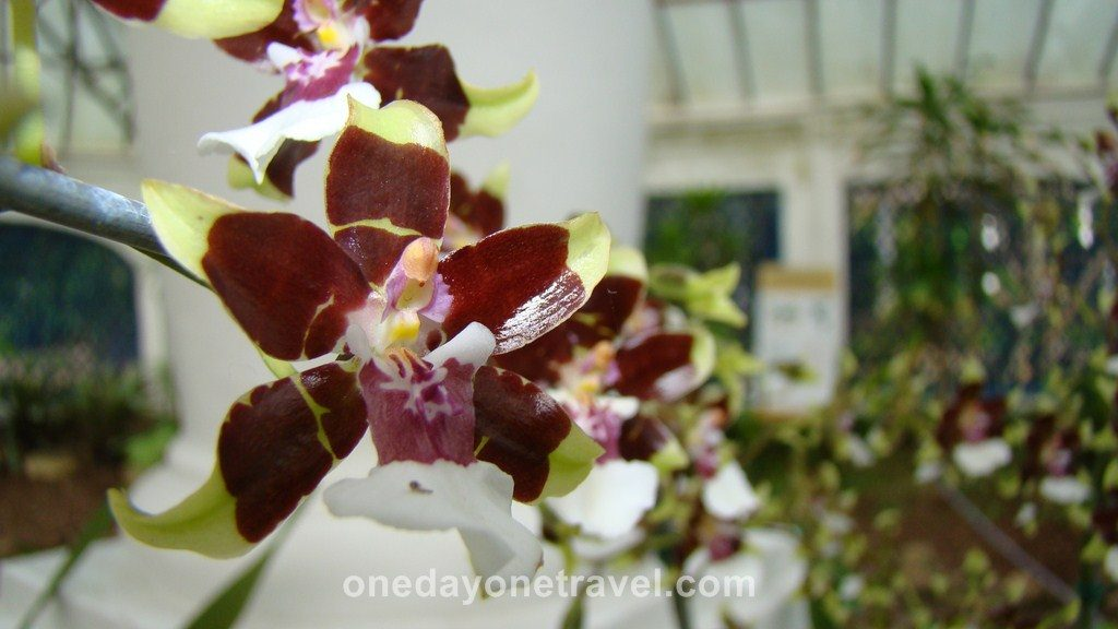 Rio de Janeiro Jardin Botanique orchidée