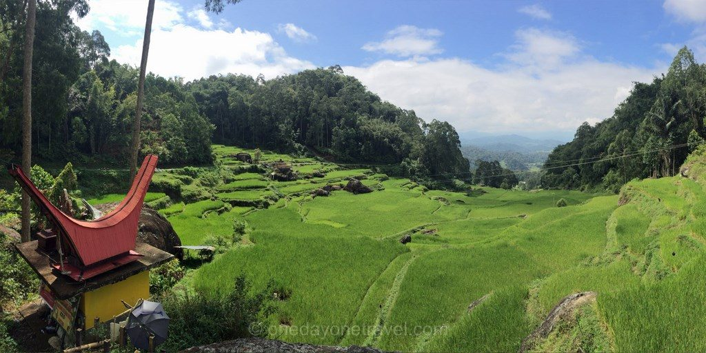 Riziere Pays Toraja Rantepao Célèbes