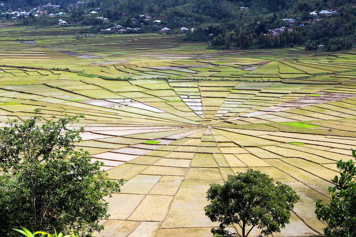 Ruteng rizières toile araignée