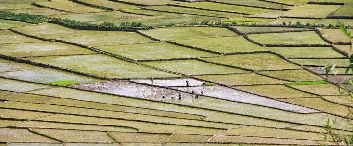 Ruteng riziere toile araignée blog voyage