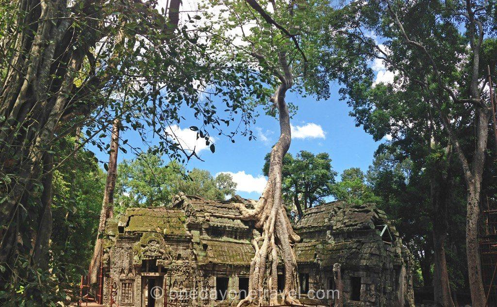 Ta prohm Angkor temple arbre racine
