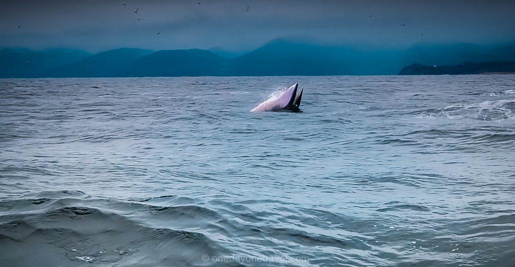Tadoussac Baleine Visiter le Québec Blog Voyage OneDayOneTravel