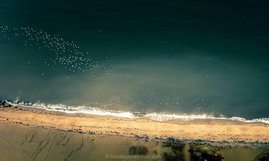 Tadoussac Dunes Oiseaux