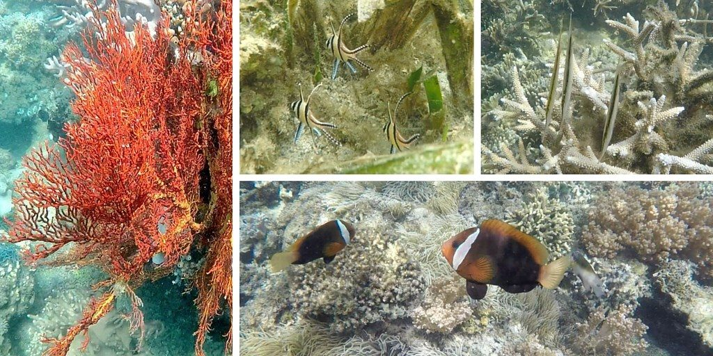 Tumbak snorkeling fond marin Sulawesi Célèbes