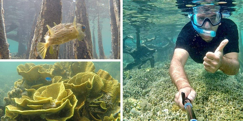 Tumbak snorkeling franck Sulawesi Célèbes