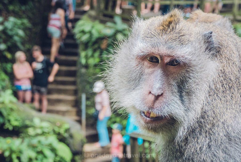 Visiter la Monkey forest d'Ubud Bali
