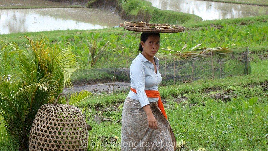 Femme dans les rizières d'Ubud