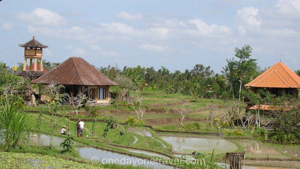 Ubud rizières Bali Indonésie