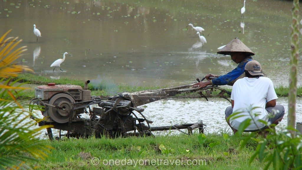 Ubud rizières Bali Indonésie agriculteur Blog Voyage