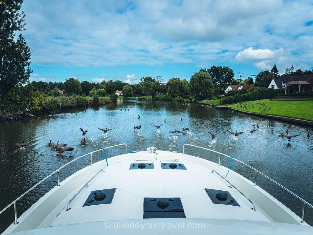 canard canal Flandre