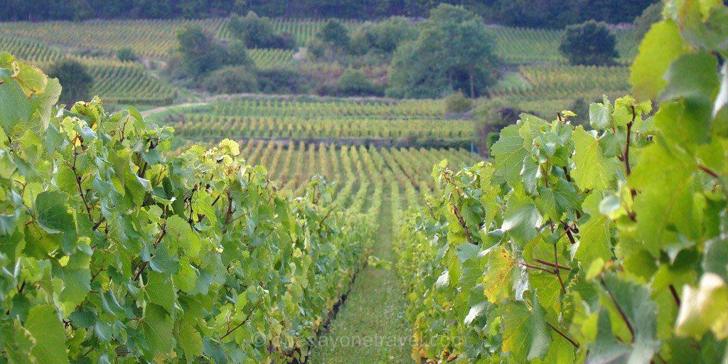 Vignobles de Bourgogne Route des Grands Crus