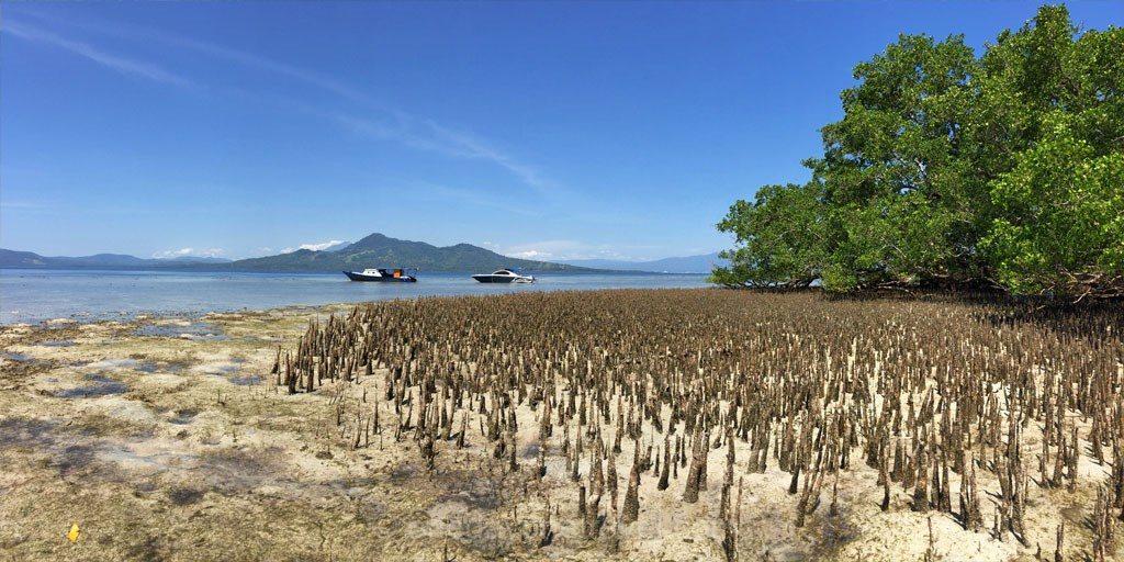 bunaken mangrove