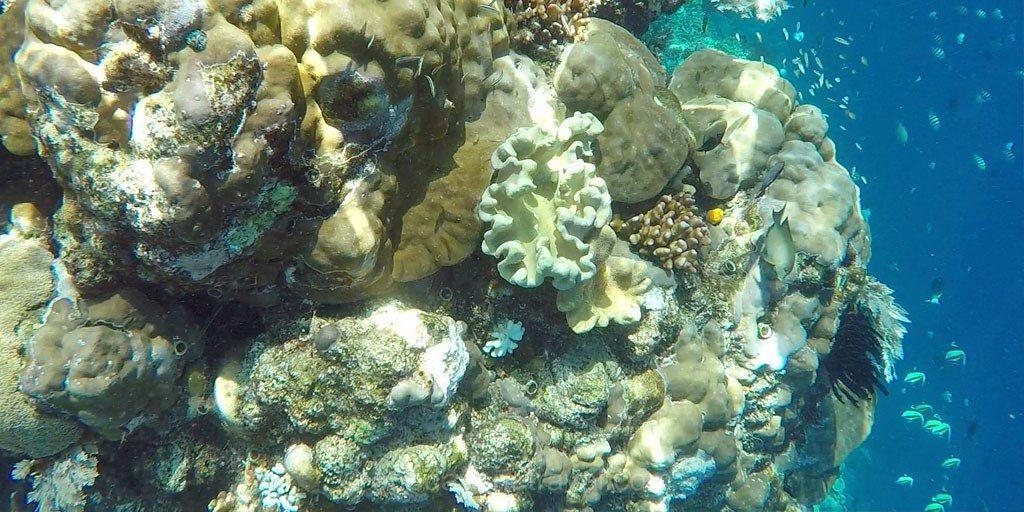 bunaken snorkeling fond marin